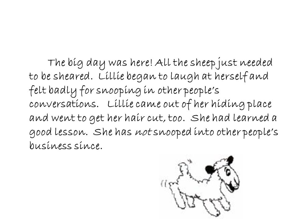 The big day was here! All the sheep just needed to be sheared. Lillie began to laugh at herself and felt badly for snooping in other people's conversa