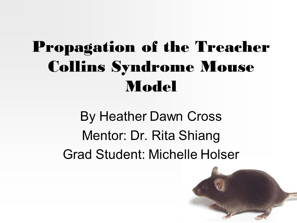 Propagation of the Treacher Collins Syndrome Mouse Model By Heather Dawn Cross Mentor: Dr.