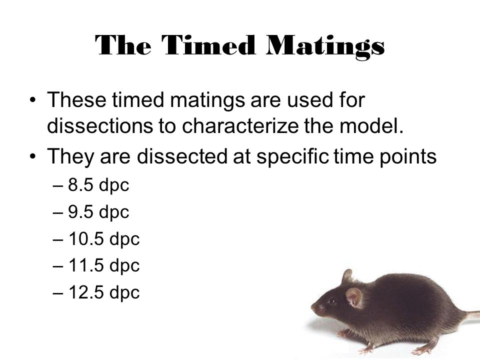 The Timed Matings These timed matings are used for dissections to characterize the model.