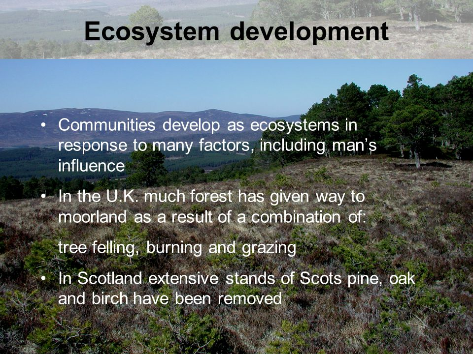 Ecosystem development Communities develop as ecosystems in response to many factors, including man's influence In the U.K. much forest has given way t