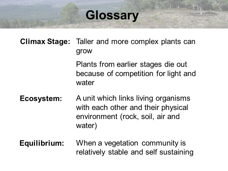 Glossary Equilibrium: A unit which links living organisms with each other and their physical environment (rock, soil, air and water) Climax Stage:Tall