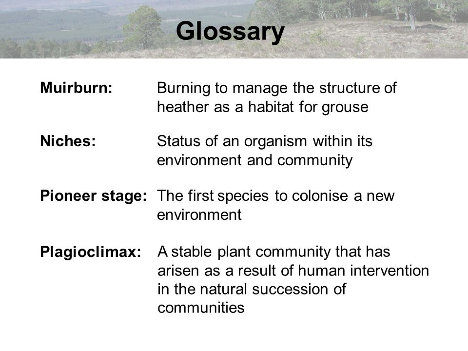 Burning to manage the structure of heather as a habitat for grouse Muirburn: Niches:Status of an organism within its environment and community Pioneer