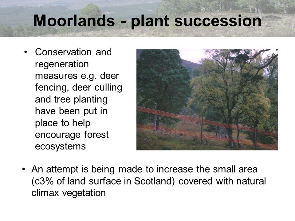 Conservation and regeneration measures e.g. deer fencing, deer culling and tree planting have been put in place to help encourage forest ecosystems Mo