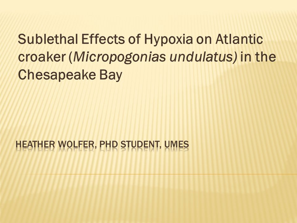 Sublethal Effects of Hypoxia on Atlantic croaker (Micropogonias undulatus) in the Chesapeake Bay