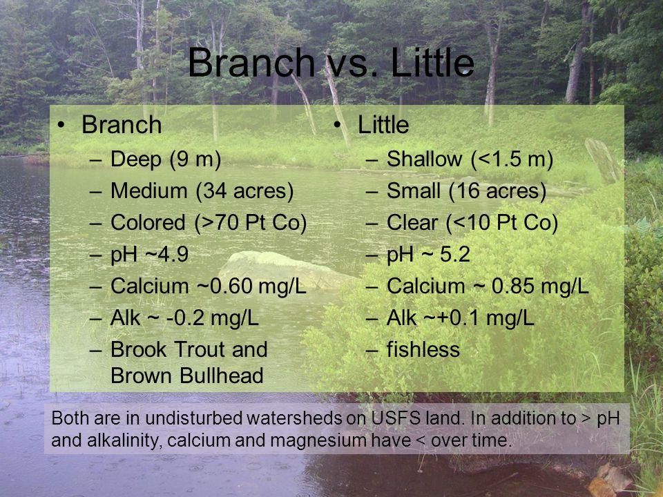 Branch vs.
