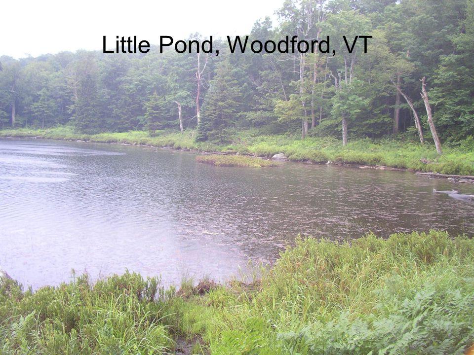 Little Pond, Woodford, VT