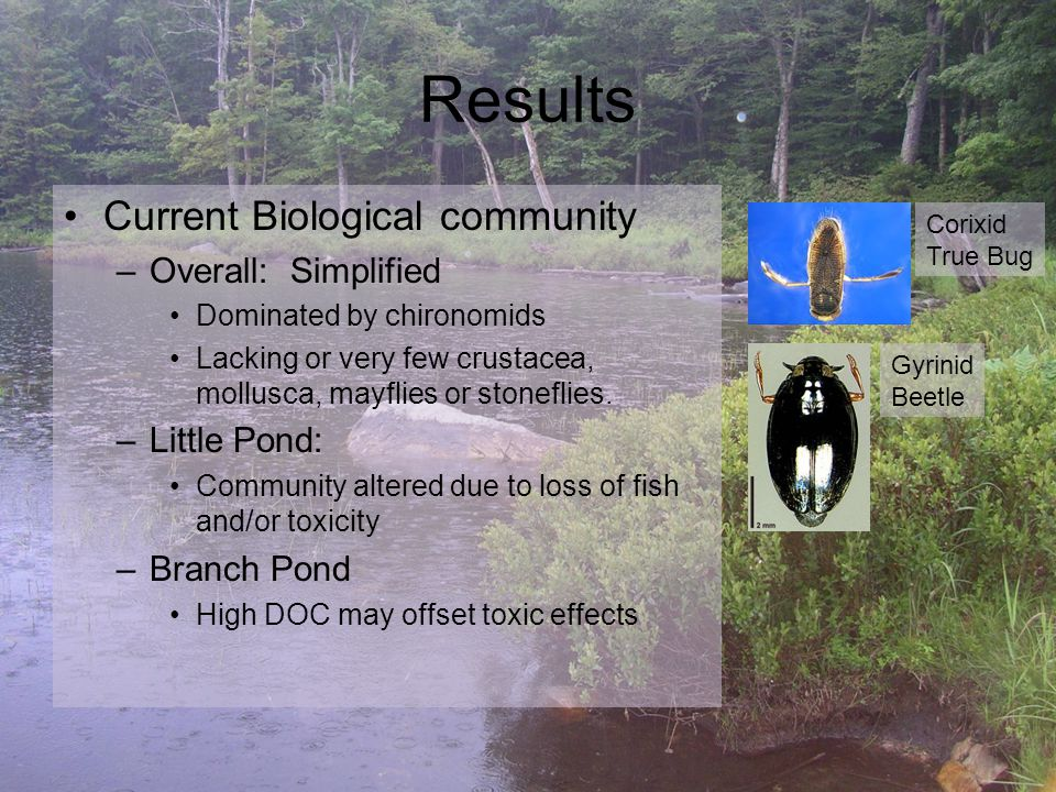 Conclusions Chemical Improvements have not manifested as significant biological improvements.