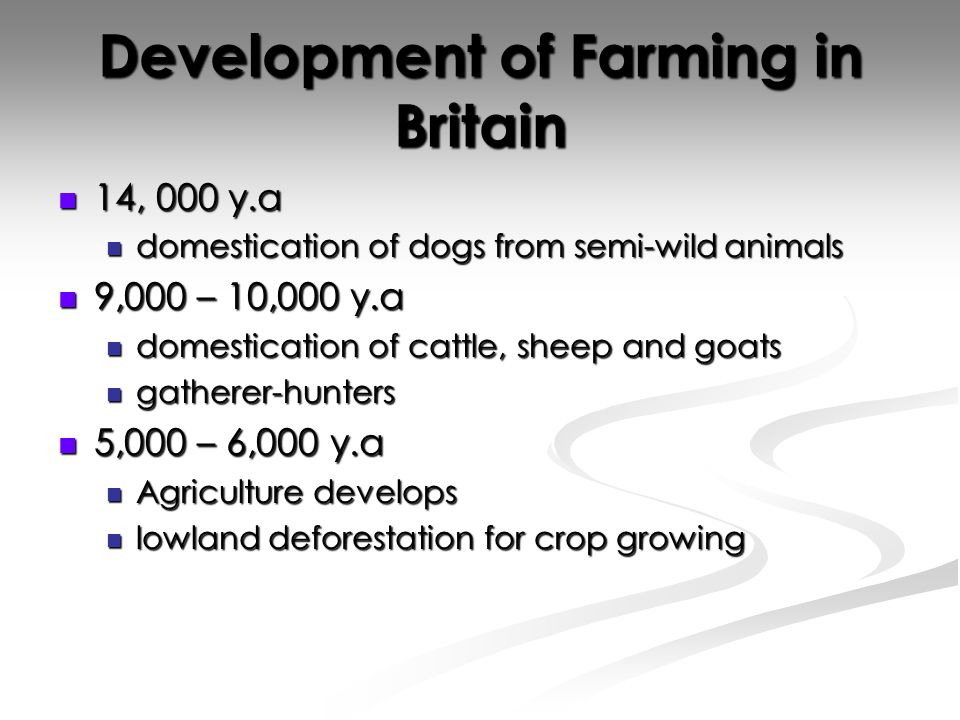 Development of Farming in Britain 14, 000 y.a 14, 000 y.a domestication of dogs from semi-wild animals domestication of dogs from semi-wild animals 9,000 – 10,000 y.a 9,000 – 10,000 y.a domestication of cattle, sheep and goats domestication of cattle, sheep and goats gatherer-hunters gatherer-hunters 5,000 – 6,000 y.a 5,000 – 6,000 y.a Agriculture develops Agriculture develops lowland deforestation for crop growing lowland deforestation for crop growing