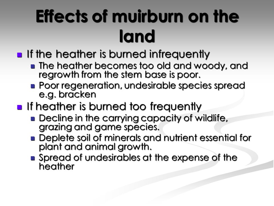 Effects of muirburn on the land If the heather is burned infrequently If the heather is burned infrequently The heather becomes too old and woody, and regrowth from the stem base is poor.