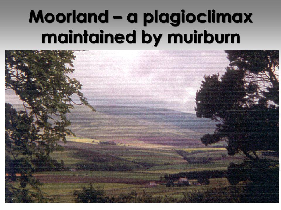 Pupil Activity Read the handout – upland land management Read the handout – upland land management Highlight the main points Highlight the main points