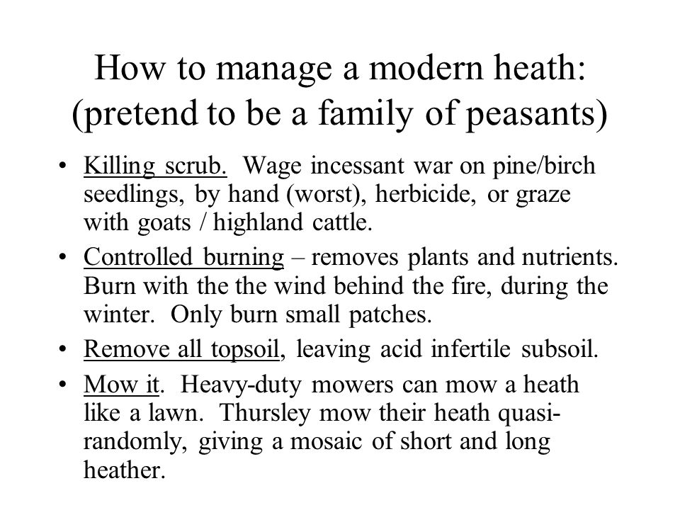 How to manage a modern heath: (pretend to be a family of peasants) Killing scrub.