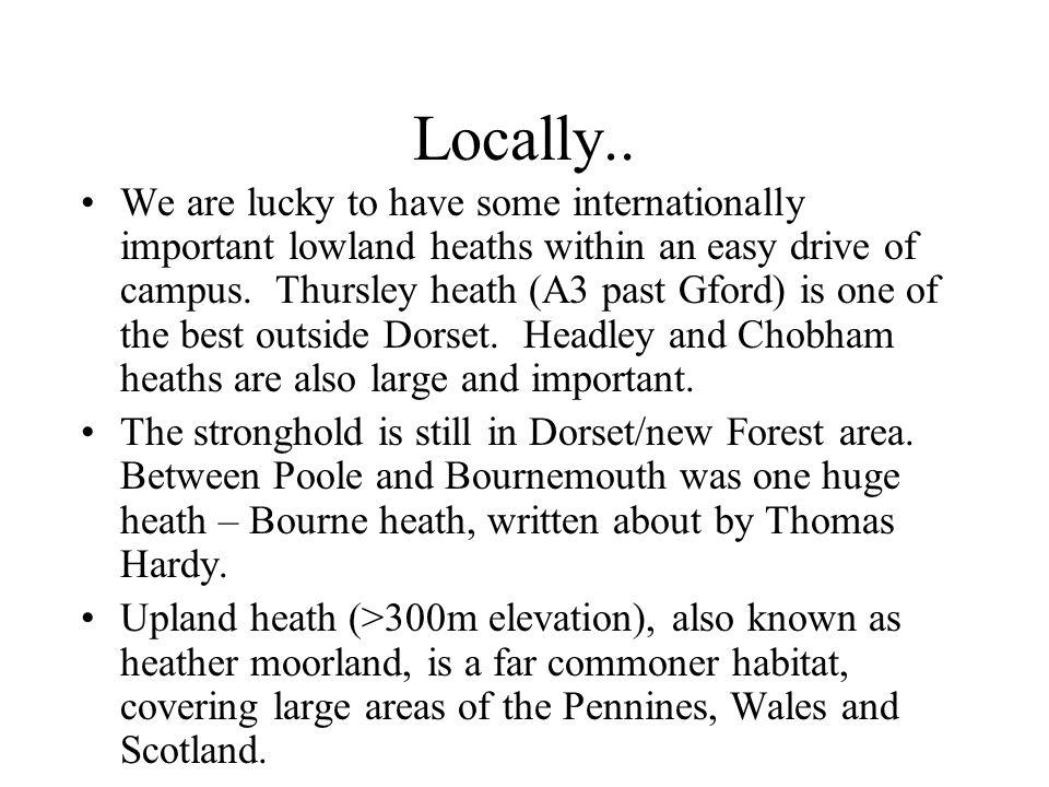 Locally..