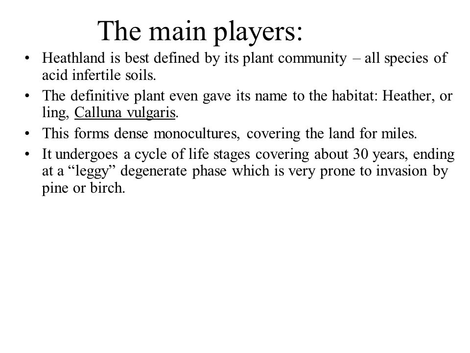 The main players: Heathland is best defined by its plant community – all species of acid infertile soils.