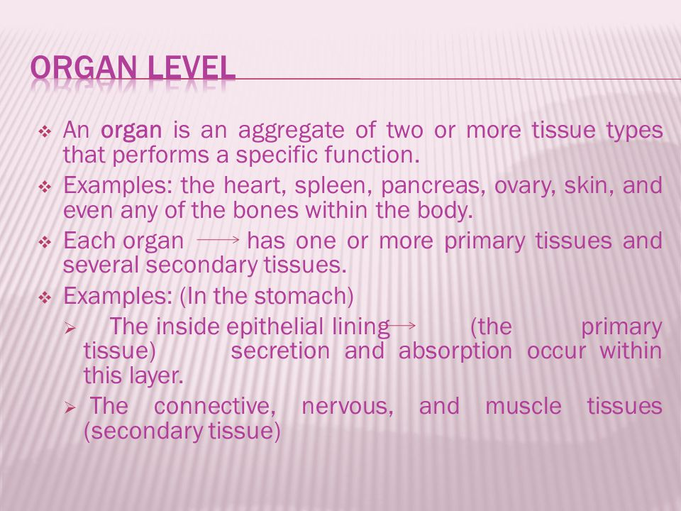  An organ is an aggregate of two or more tissue types that performs a specific function.