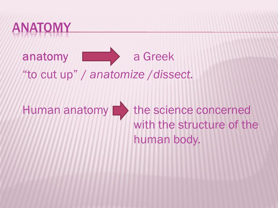  A body system consists of various organs that have similar or related functions.