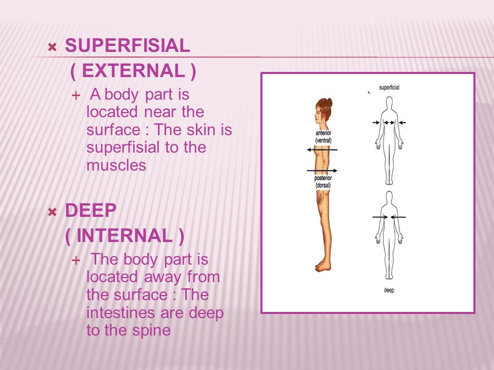  SUPERFISIAL ( EXTERNAL )  A body part is located near the surface : The skin is superfisial to the muscles  DEEP ( INTERNAL )  The body part is located away from the surface : The intestines are deep to the spine