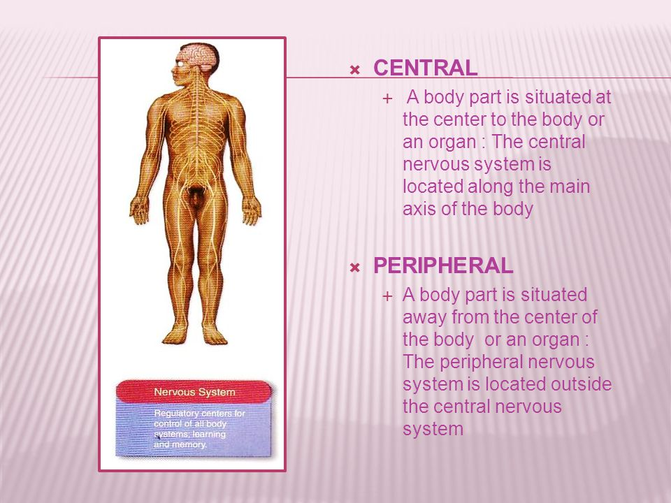  CENTRAL  A body part is situated at the center to the body or an organ : The central nervous system is located along the main axis of the body  PERIPHERAL  A body part is situated away from the center of the body or an organ : The peripheral nervous system is located outside the central nervous system
