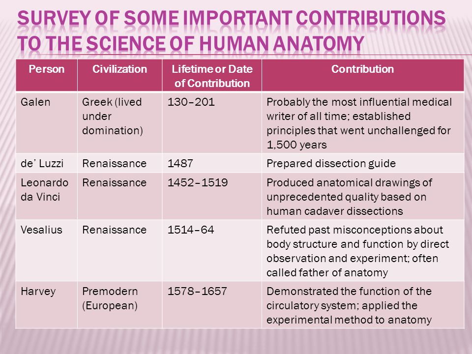 PersonCivilizationLifetime or Date of Contribution Contribution GalenGreek (lived under domination) 130–201Probably the most influential medical writer of all time; established principles that went unchallenged for 1,500 years de' LuzziRenaissance1487Prepared dissection guide Leonardo da Vinci Renaissance1452–1519Produced anatomical drawings of unprecedented quality based on human cadaver dissections VesaliusRenaissance1514–64Refuted past misconceptions about body structure and function by direct observation and experiment; often called father of anatomy HarveyPremodern (European) 1578–1657Demonstrated the function of the circulatory system; applied the experimental method to anatomy
