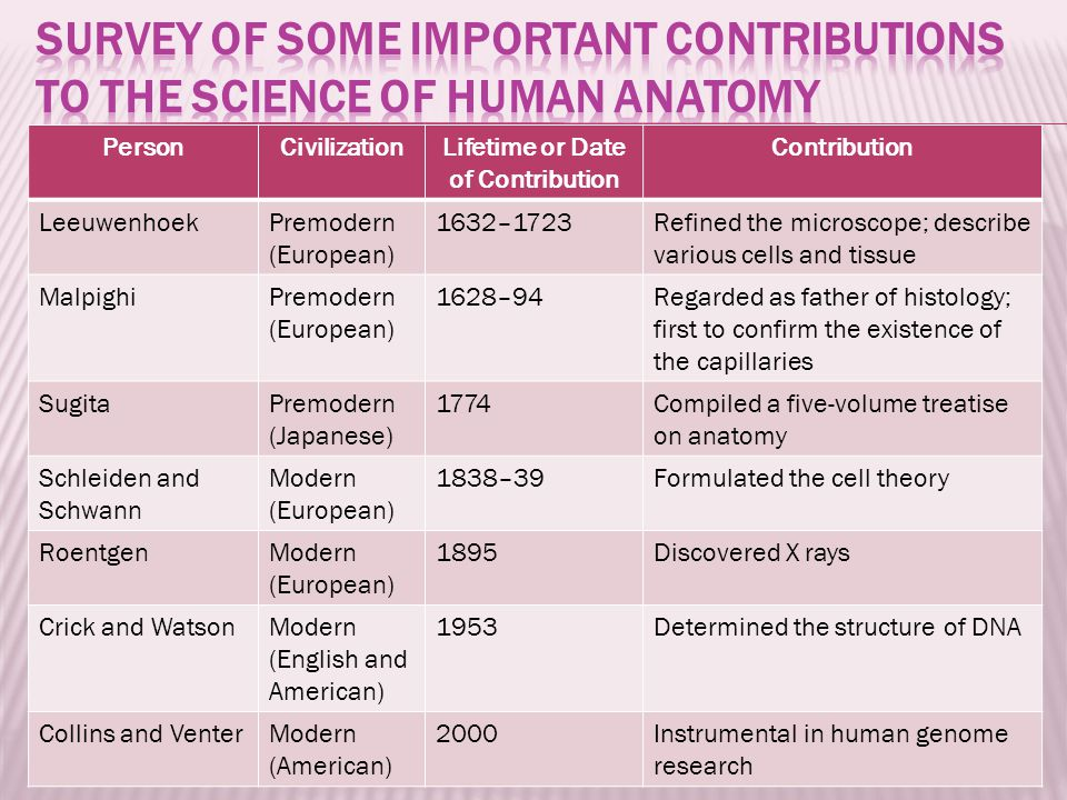 PersonCivilizationLifetime or Date of Contribution Contribution LeeuwenhoekPremodern (European) 1632–1723Refined the microscope; describe various cells and tissue MalpighiPremodern (European) 1628–94Regarded as father of histology; first to confirm the existence of the capillaries SugitaPremodern (Japanese) 1774Compiled a five-volume treatise on anatomy Schleiden and Schwann Modern (European) 1838–39Formulated the cell theory RoentgenModern (European) 1895Discovered X rays Crick and WatsonModern (English and American) 1953Determined the structure of DNA Collins and VenterModern (American) 2000Instrumental in human genome research