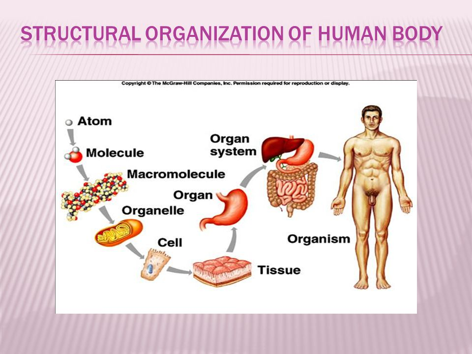  SUPERFISIAL ( EXTERNAL )  A body part is located near the surface : The skin is superfisial to the muscles  DEEP ( INTERNAL )  The body part is located away from the surface : The intestines are deep to the spine