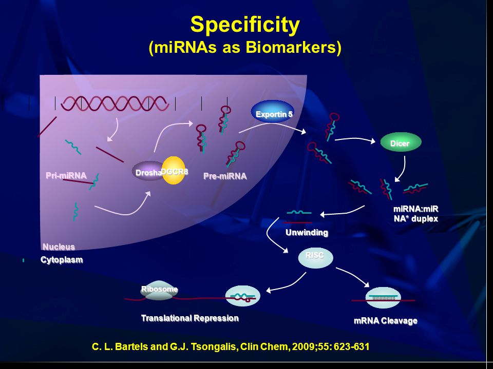 miRNA Profiling from Pancreatic FNAs Szafranska, Doleshal, Edmunds, Gordon, Luttges, Mundingv Barth Jr, Gutmann, Siriawinata, Pipas, Tannapfel, Korc, Hahn, Labourier, Tsongalis.