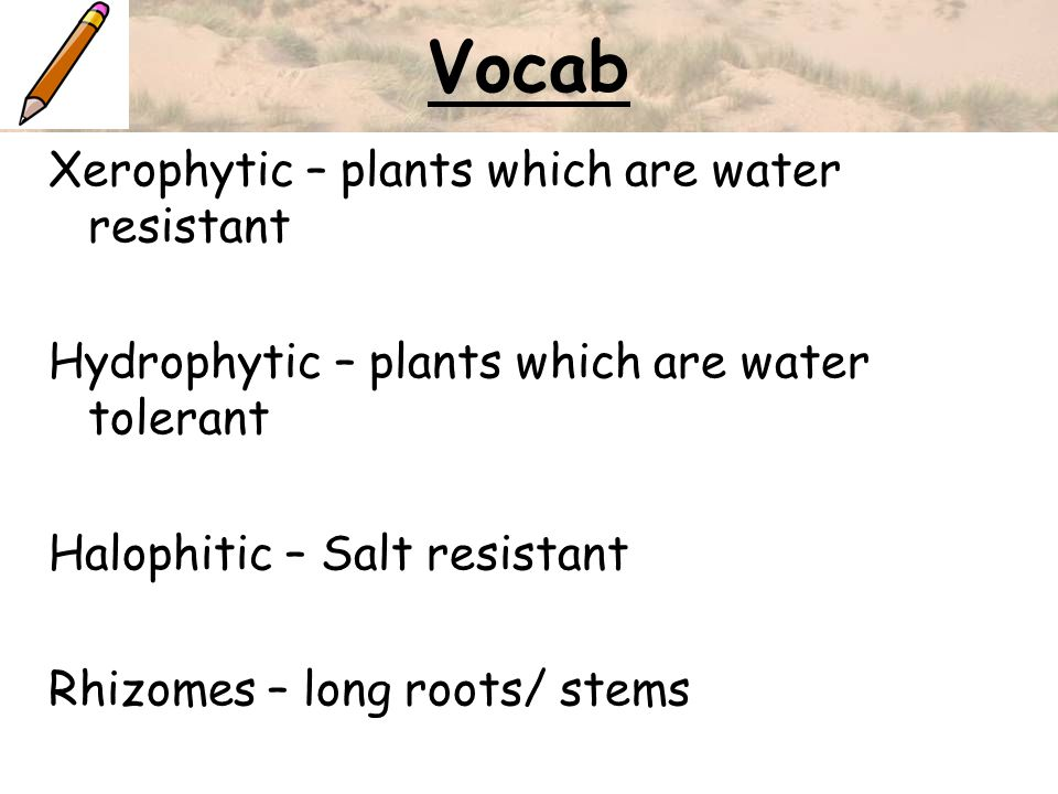 Vocab Xerophytic – plants which are water resistant Hydrophytic – plants which are water tolerant Halophitic – Salt resistant Rhizomes – long roots/ s
