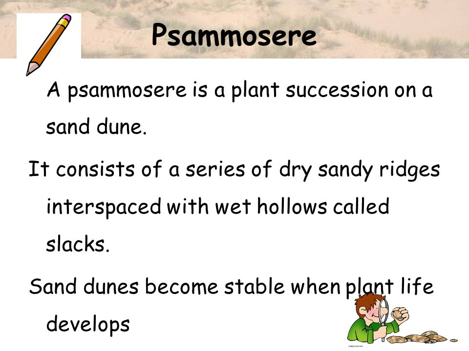 Psammosere A psammosere is a plant succession on a sand dune.