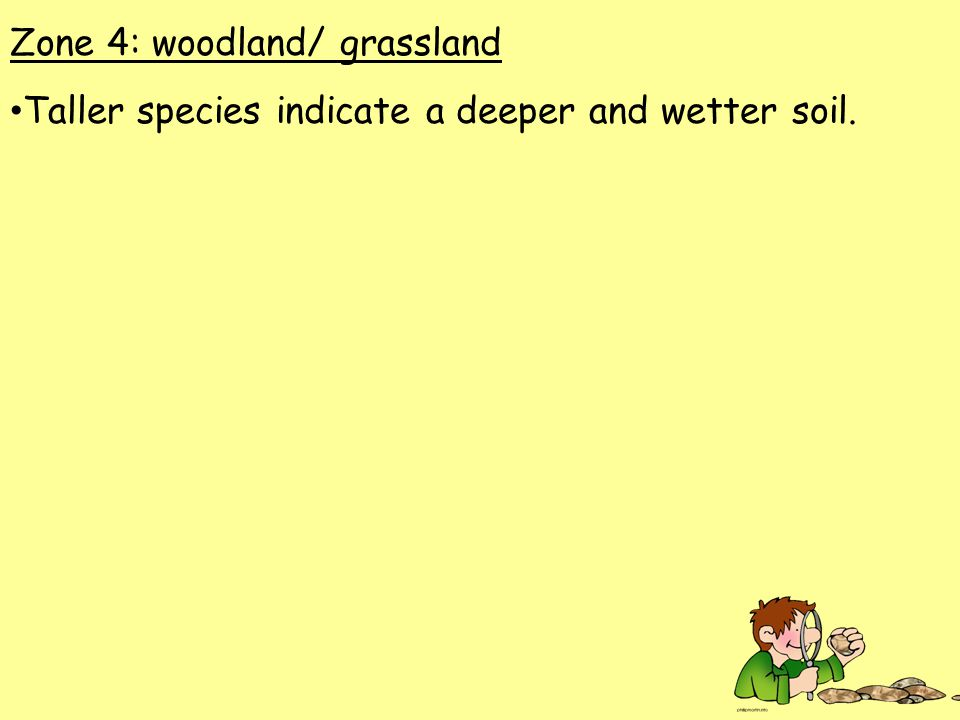 Zone 4: woodland/ grassland Taller species indicate a deeper and wetter soil.