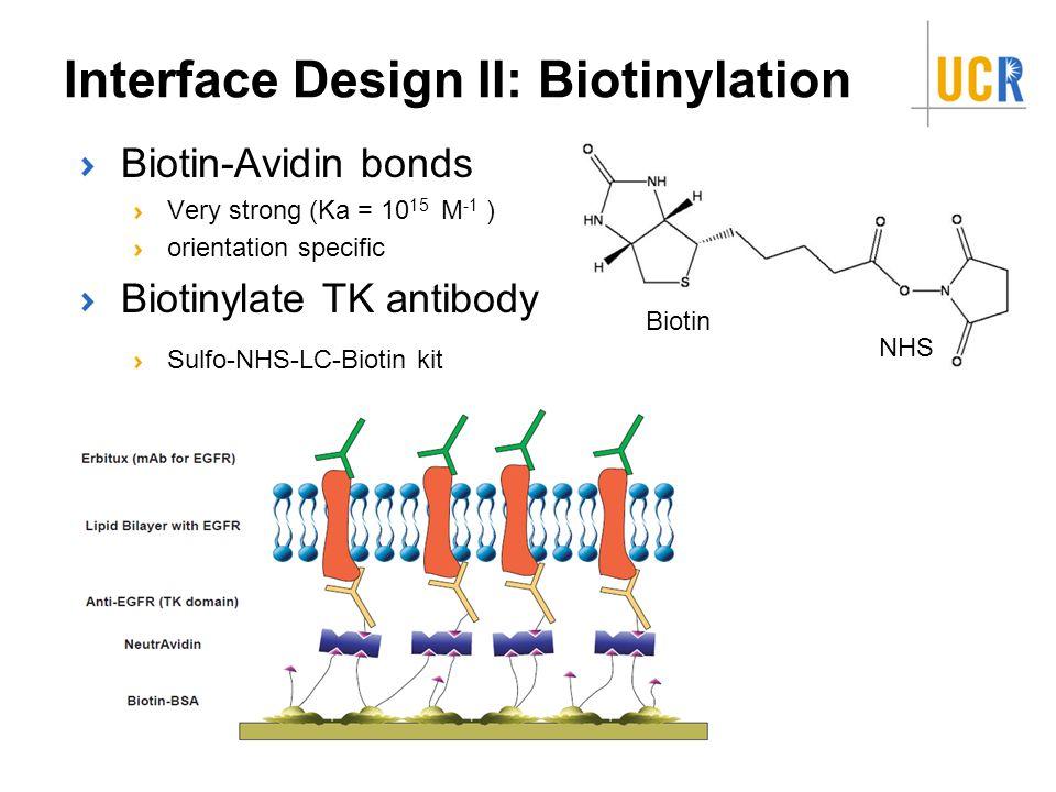 Interface Design II: Biotinylation Biotin-Avidin bonds Very strong (Ka = 10 15 M -1 ) orientation specific Biotinylate TK antibody Sulfo-NHS-LC-Biotin kit Biotin NHS