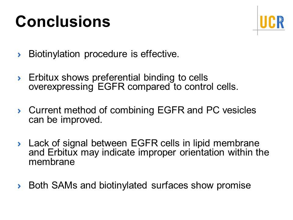 Conclusions Biotinylation procedure is effective.