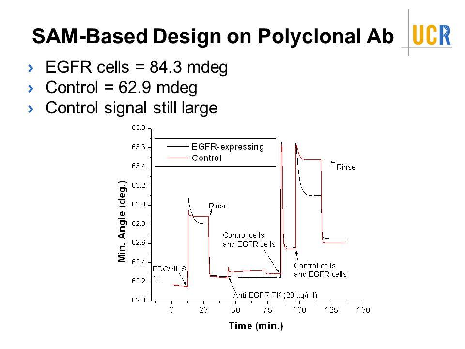 SAM-Based Design on Polyclonal Ab EGFR cells = 84.3 mdeg Control = 62.9 mdeg Control signal still large
