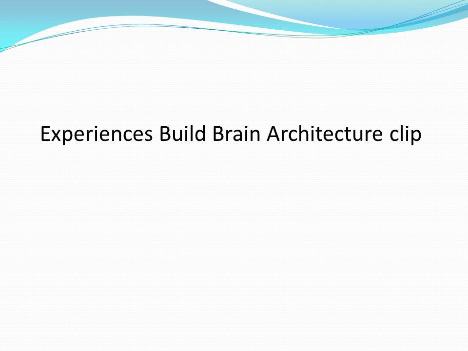 Experiences Build Brain Architecture clip