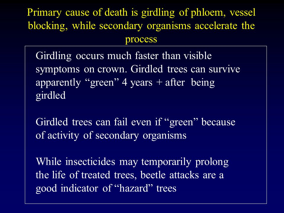Primary cause of death is girdling of phloem, vessel blocking, while secondary organisms accelerate the process Girdling occurs much faster than visible symptoms on crown.
