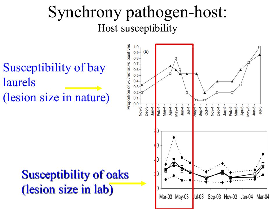Synchrony pathogen-host: Host susceptibility Susceptibility of oaks (lesion size in lab) Susceptibility of bay laurels (lesion size in nature)