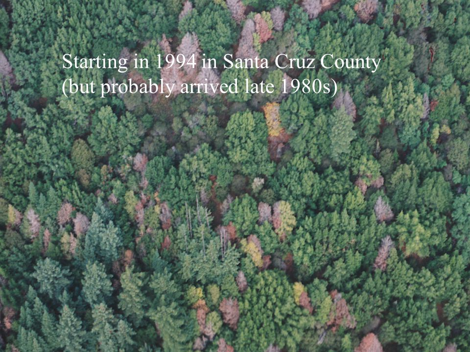 Starting in 1994 in Santa Cruz County (but probably arrived late 1980s)
