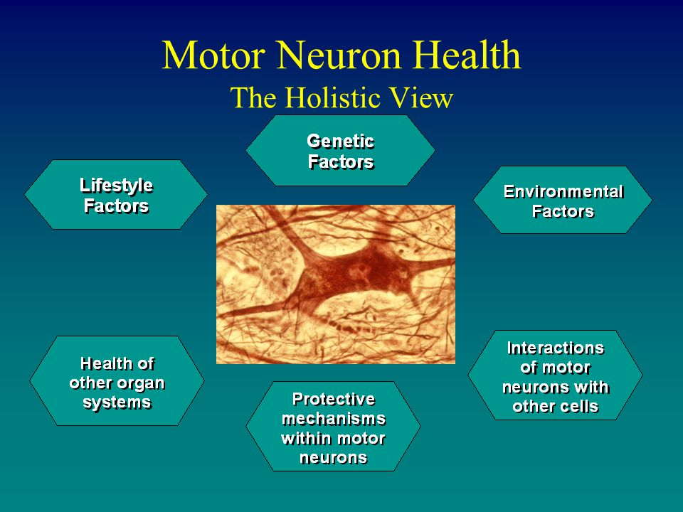 Motor Neuron Health The Holistic View