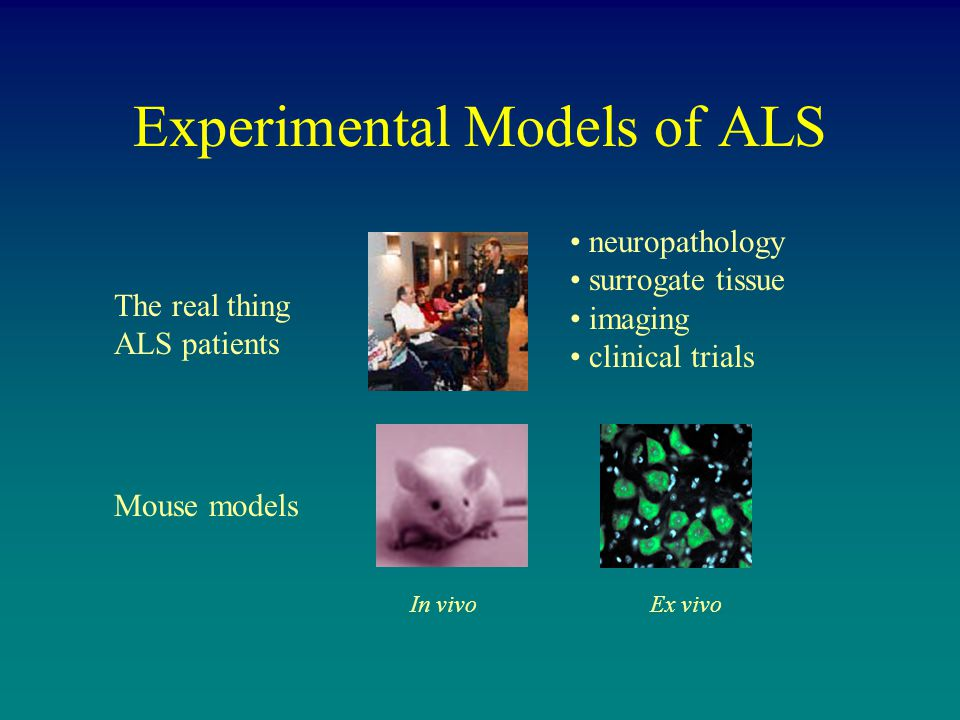 Experimental Models of ALS The real thing ALS patients Mouse models In vivoEx vivo neuropathology surrogate tissue imaging clinical trials