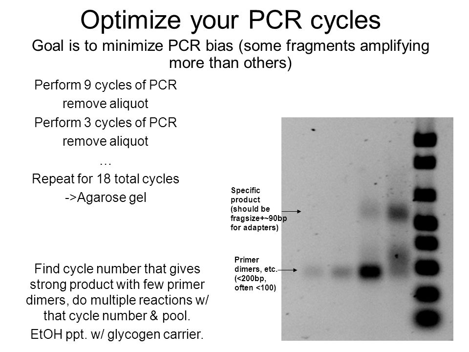 Optimize your PCR cycles Perform 9 cycles of PCR remove aliquot Perform 3 cycles of PCR remove aliquot … Repeat for 18 total cycles ->Agarose gel Goal