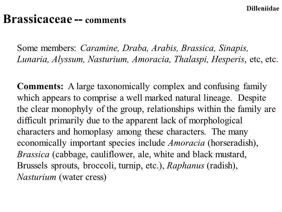 Brassicaceae -- comments Some members: Caramine, Draba, Arabis, Brassica, Sinapis, Lunaria, Alyssum, Nasturium, Amoracia, Thalaspi, Hesperis, etc, etc.