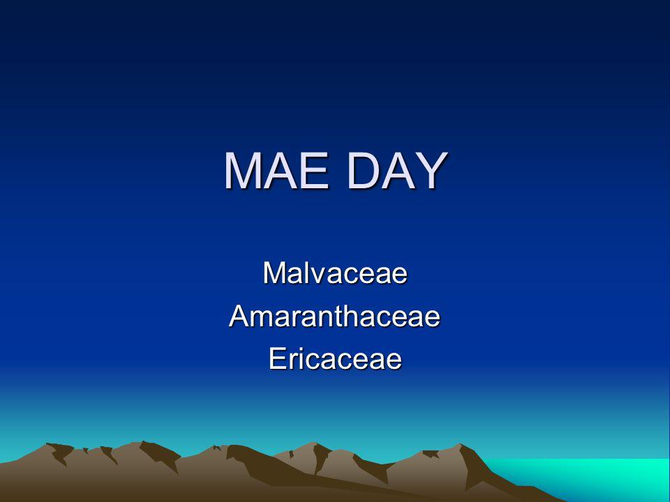 MAE DAY MalvaceaeAmaranthaceaeEricaceae