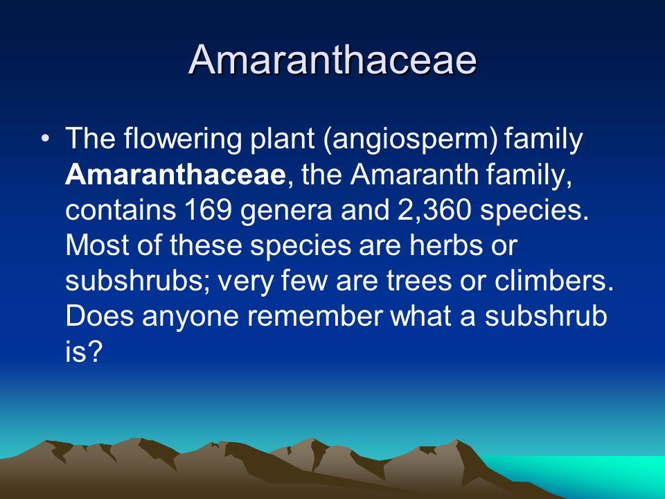 Amaranthaceae The flowering plant (angiosperm) family Amaranthaceae, the Amaranth family, contains 169 genera and 2,360 species.