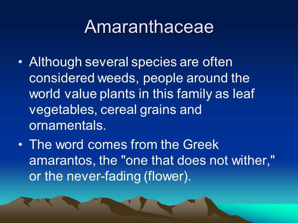 Amaranthaceae Although several species are often considered weeds, people around the world value plants in this family as leaf vegetables, cereal grains and ornamentals.