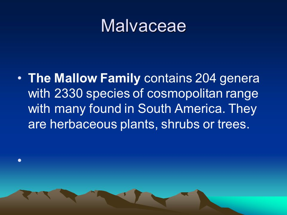 Malvaceae The Mallow Family contains 204 genera with 2330 species of cosmopolitan range with many found in South America.