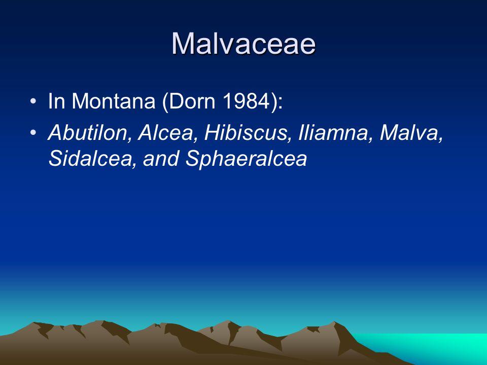 Malvaceae In Montana (Dorn 1984): Abutilon, Alcea, Hibiscus, Iliamna, Malva, Sidalcea, and Sphaeralcea
