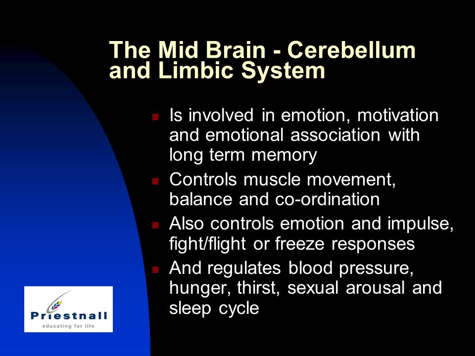 The Mid Brain - Cerebellum and Limbic System Is involved in emotion, motivation and emotional association with long term memory Controls muscle movement, balance and co-ordination Also controls emotion and impulse, fight/flight or freeze responses And regulates blood pressure, hunger, thirst, sexual arousal and sleep cycle
