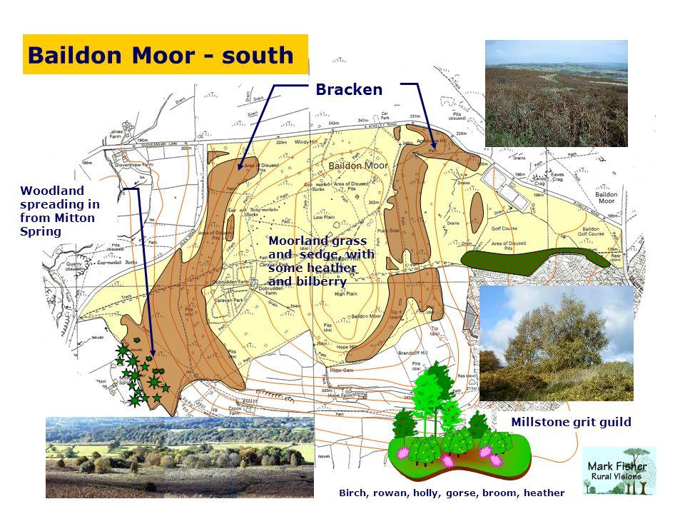 Baildon Moor - south Bracken Woodland spreading in from Mitton Spring Millstone grit guild Birch, rowan, holly, gorse, broom, heather Moorland grass a