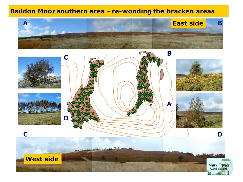 A AB B C C D D East side West side Baildon Moor southern area - re-wooding the bracken areas