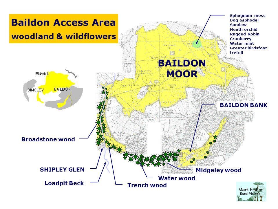 Baildon Access Area woodland & wildflowers Midgeley wood Water wood Trench wood Broadstone wood BAILDON BANK BAILDON MOOR Loadpit Beck SHIPLEY GLEN Sp