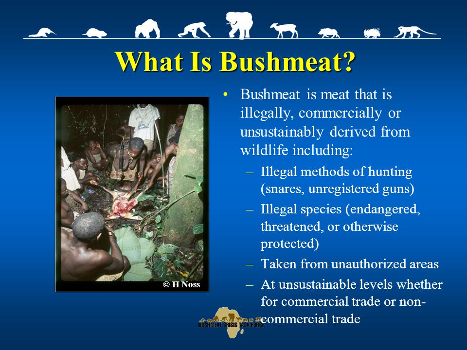 Why Is There a Bushmeat Crisis.