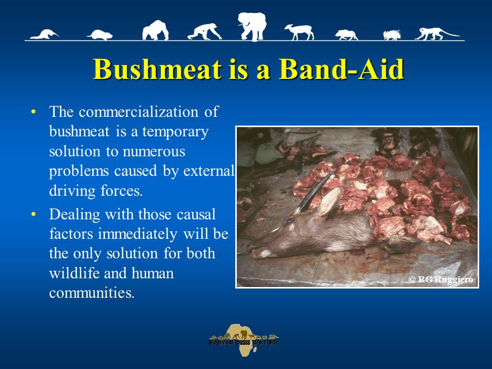 The Bushmeat Crisis Task Force The Bushmeat Crisis Task Force A collection of organizations and experts committed to addressing this crisis for the sake of future generations of Africans and wildlife.